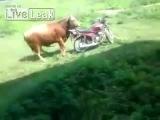 Любовная история быка и мотоцикла