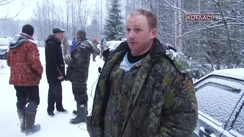 Волки атакуют деревню Федотовская 23 11 2017