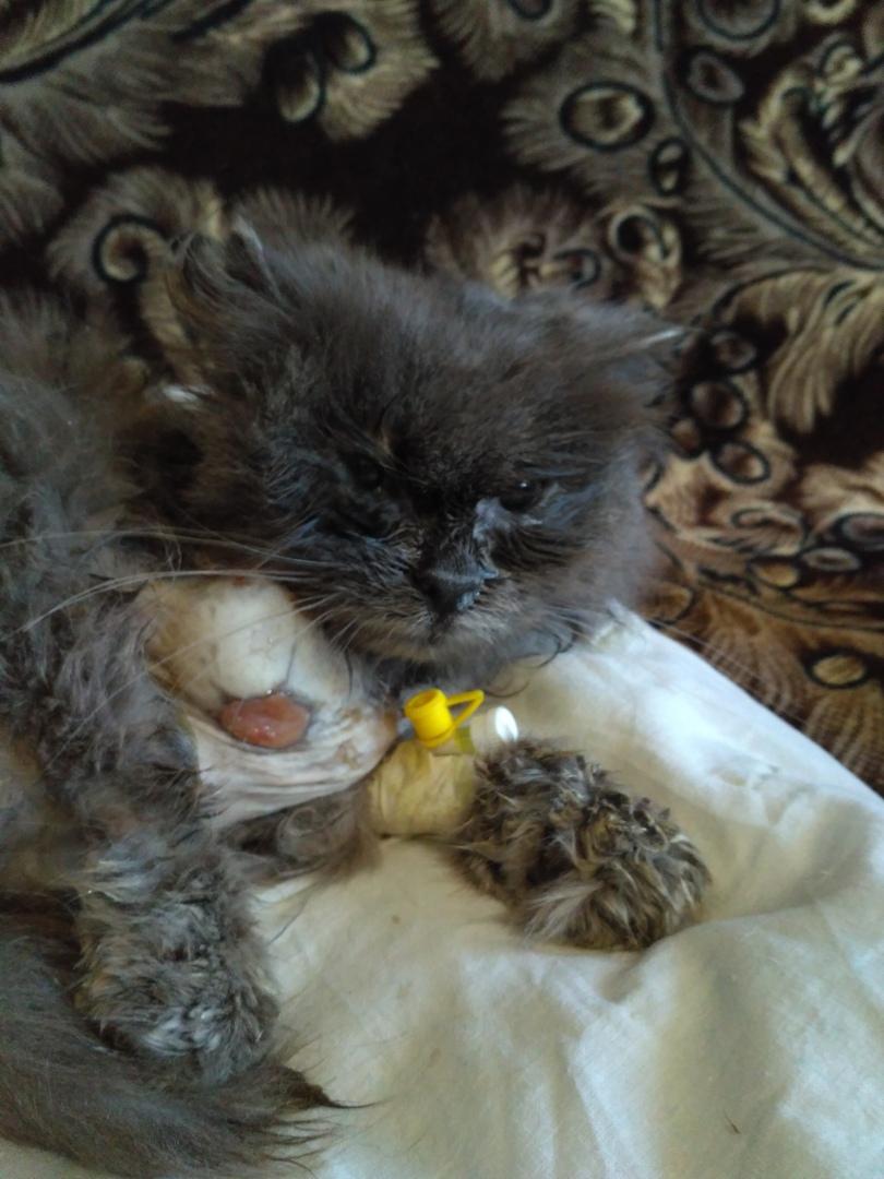 Дымка, 6 в семье, у нее судьба тяжелая, родилась в...