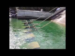 «Рыбная пушка» помогает лососям преодолевать препятствия Идущим на нерест рыбам больше не будут мешать шлюзы и гидроэлектростанции.  Volitional Fish Entry Feasibility at Roza Facility
