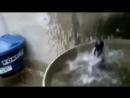Бухой Юмор - Смешные коты и кошки. Прикольные видео. 1№.
