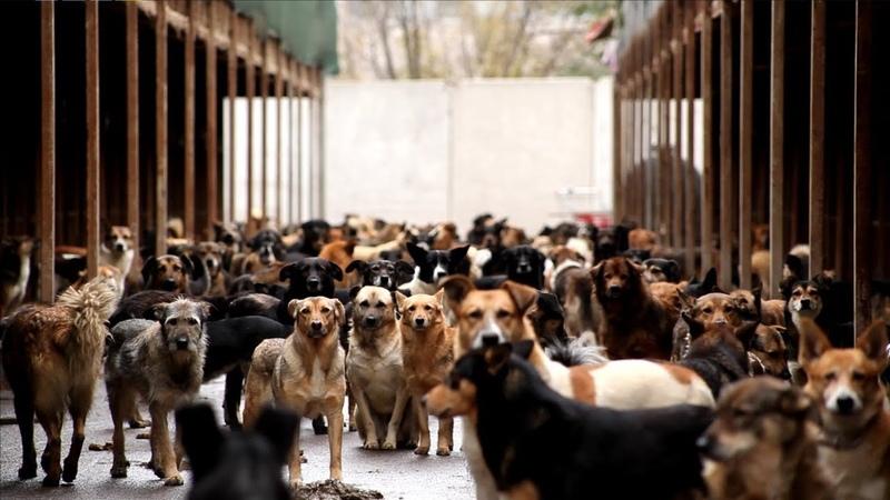 Каждая собака - документальный фильм о приютских собаках