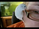 Life with a Parrotlet.