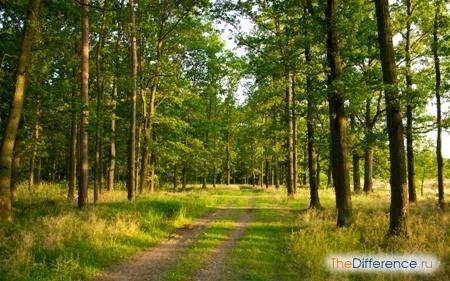 Разница между лугом и лесом