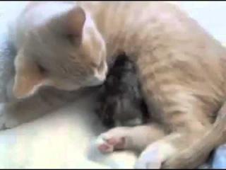 Приколы с котами и кошками Птица в шоке от кота!