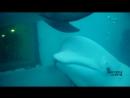 Дайвинг с дельфинами июль3