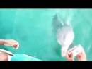 Дельфин вернул девушке потерянный iPhone