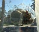 Установил кормушку на окно, что бы понаблюдать за птицами с близкого расстояния…