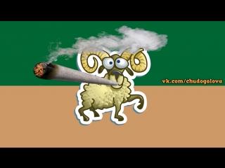 НАкуренный козёл братуха-козлуха