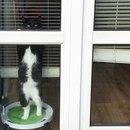 Каждое утро, когда я иду на работу, мой кот провожает меня взглядом из окна…