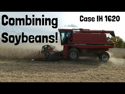 Combining Soybeans With A Case IH 1620 Combine