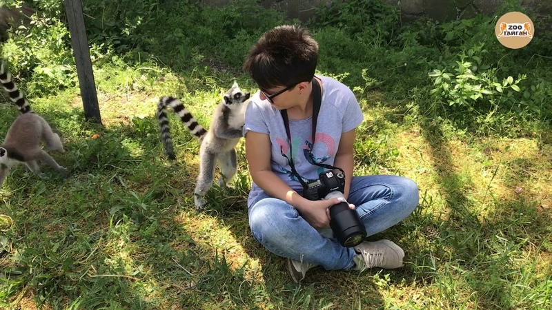 Первое знакомство с лемурами.Тайган. Крым | The first acquaintance with lemurs