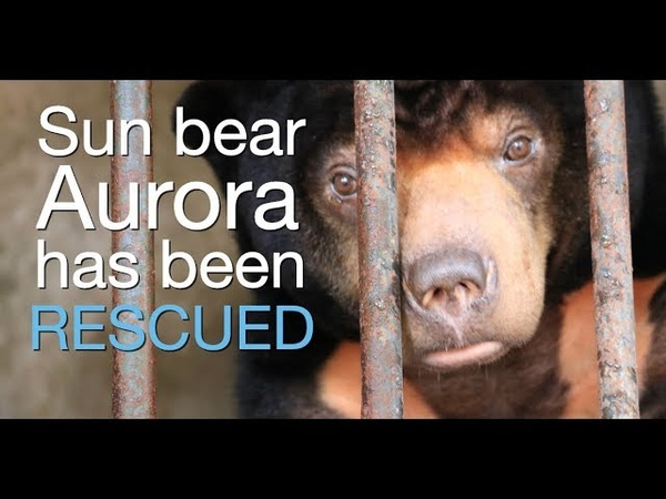 Sun bear rescued from 15 years of cruelty as an exotic pet
