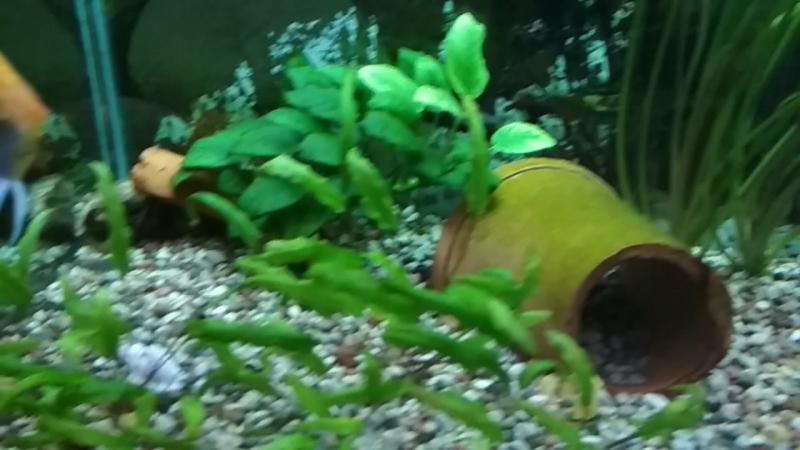 Мой подводный мир