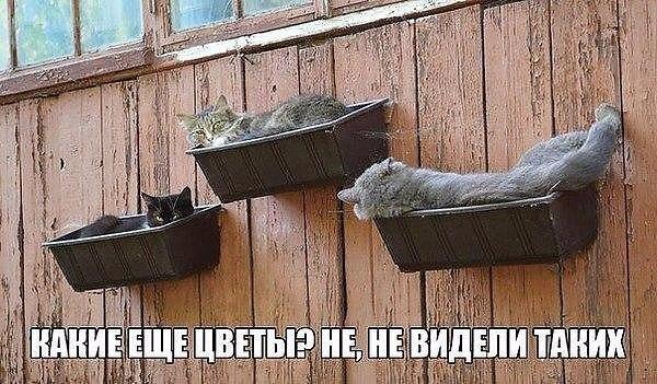 коты и цветы - Страница 2 LAzHCHIDUIQ