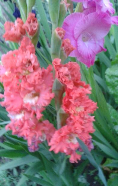 Цветы у Ликки - Страница 2 CmO5pkcA37c