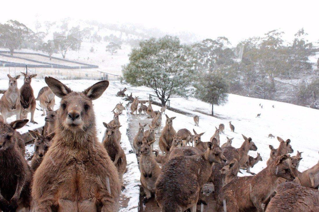 Картинки по запросу В Австралии выпал снег