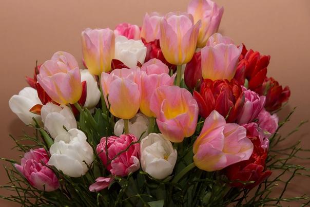 Дорогие женщины, милые девушки! Примите самые искренние поздравления с замечательным весенним праздником Международным женским днем!Женщина это целый мир, в котором любовь и красота соседствуют
