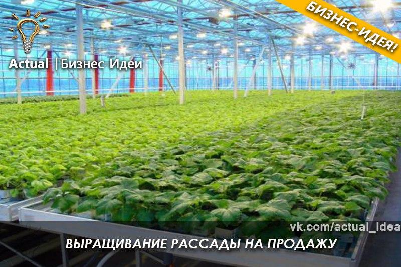 Как выращивают рассаду на продажу 653