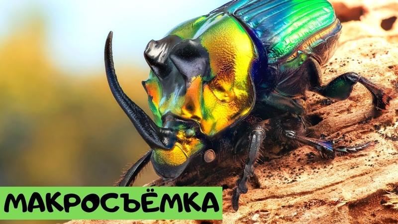 Макросъемка. Удивительный мир жуков