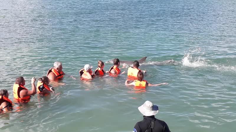 Куба дельфины
