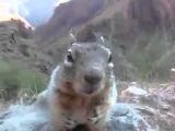 Как хватает белочка  короткие Лучшие видео и смешные приколы  с животными
