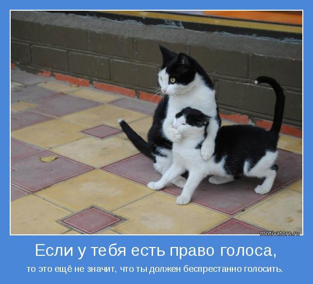 FfqIlfQKBG4.jpg