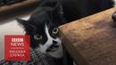 Поющий кот из Японии