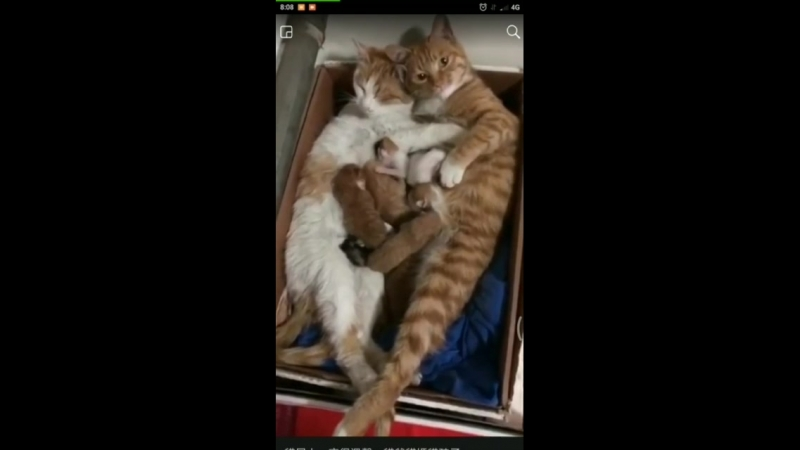 котят родились
