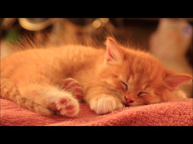 Smight - Sleeping (Tabriz Zuckermann 'Burn' Remix)