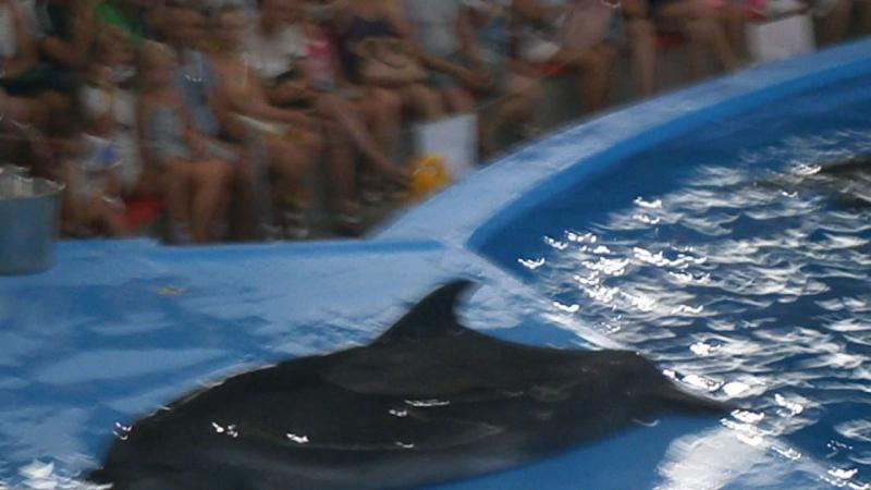 Сочи парк. Шоу с дельфинами Часть 3
