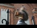 Бельчонок удобно устроился на заборе грызёт орех
