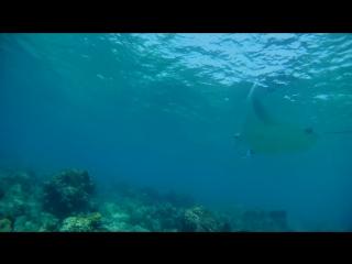 Фридайвинг с мантой на Мальдивах.