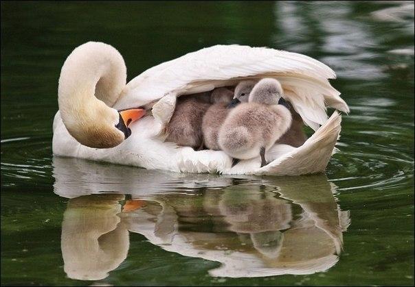 Родители и дети)