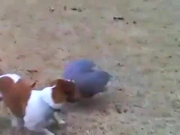 Get him Stanley! :D · coub, коуб