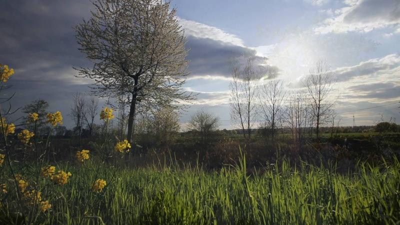 Armenoids - Hover Elan