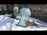 Снегири, зяблики, синицы, горлицы и другие птицы