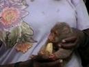 Pet cuscus