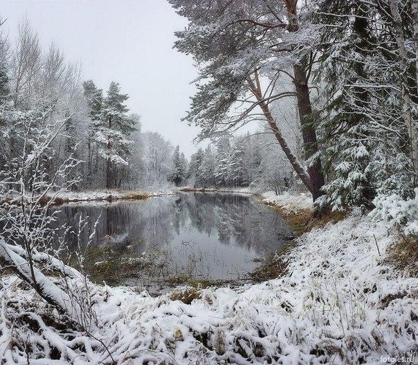 Река Ширшема, Архангельская область. Автор фото: Илья Михайлович.