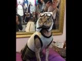 Смешной кот Адам в шлеме