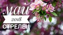 Стрелец: Гороскоп на Май 2018.Любовный гороскоп. Финансовый гороскоп