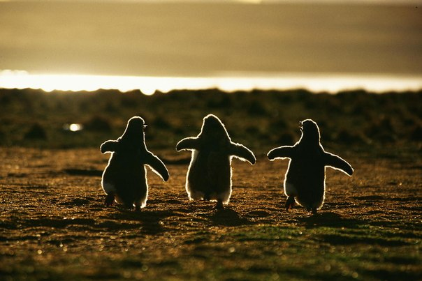 Andreas Butz #pinguin