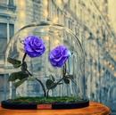 Эти розы в стиле мультфильма «Красавица и чудовище» не требуют никакого ухода и не увядают…