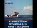 Календарь 23 июля Всемирный день китов и дельфинов