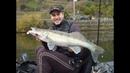 Pesca Vertical aos Lucioperca   Vertical Zander