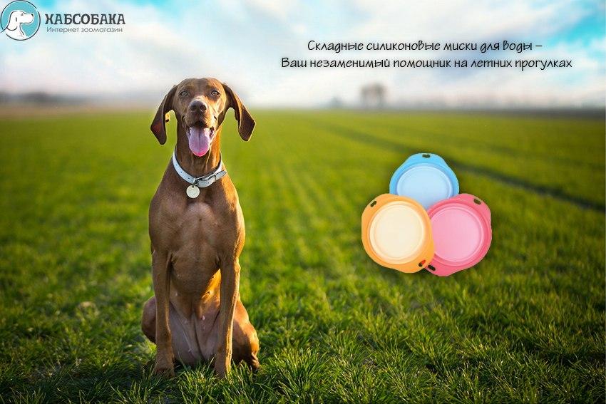 ХАБСОБАКА: Большое поступление знаменитых игрушек Гигви!!!!!! (Хабаровск) - Страница 5 7lJxQKJ1zqg