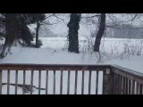 Новый Год в Марте!В США штате Пенсильвания обьявил енота чрезвычайное положение!