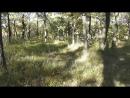 Вырубка уникальной дубовой рощи в лесопарке Энгельса Власти бездействуют Саратов