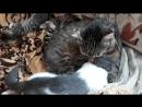 Васятка Ма Па Вазген Александрович очччень любит маленьких малышей котиков и моет их