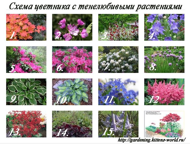 Схема цветника с тенелюбивыми растениями в розовых тонах
